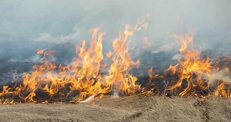 лесные пожары челябинская область