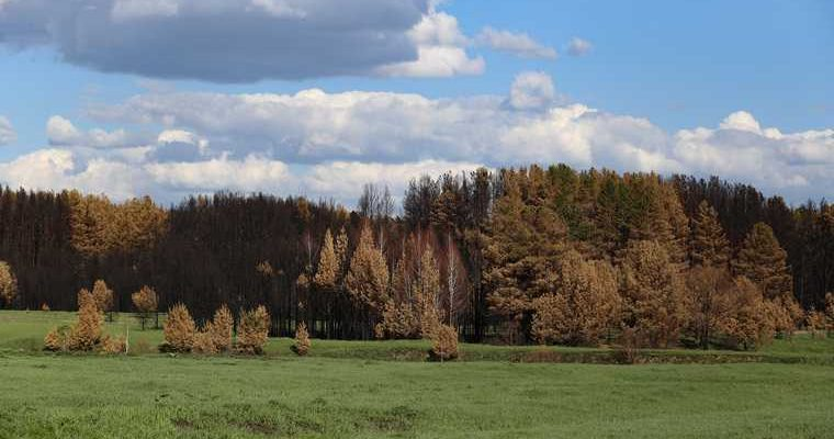 в Кургане запретили посещать леса