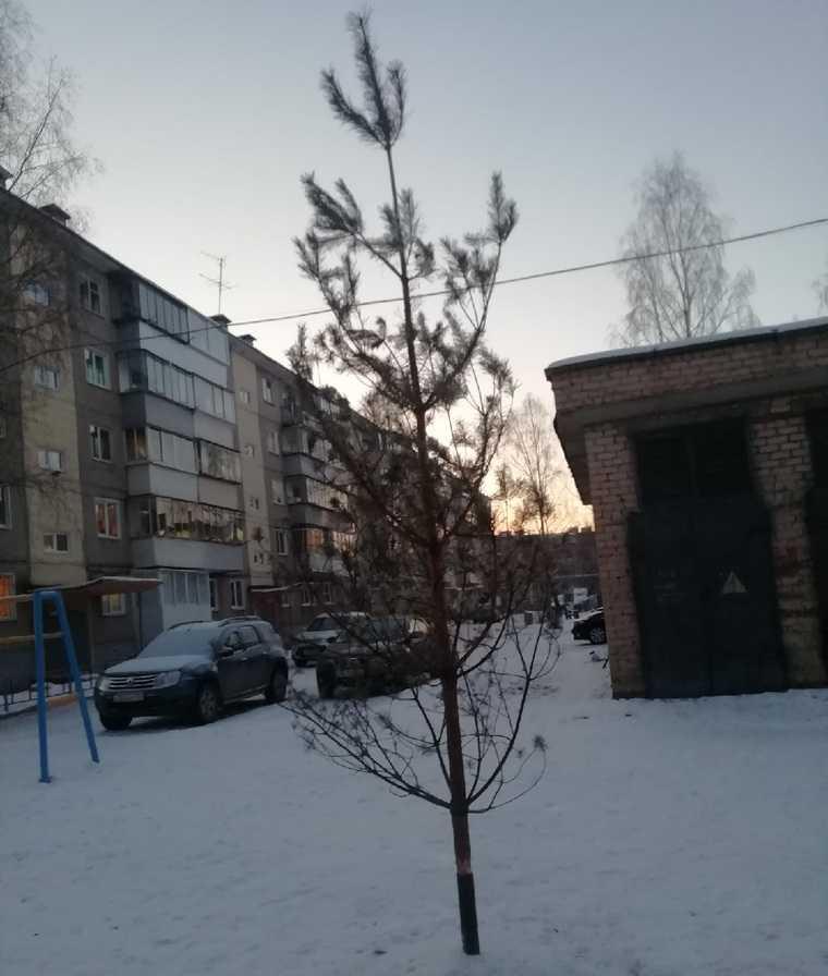 Депутат установил челябинцам прошлогоднюю елку. Фото