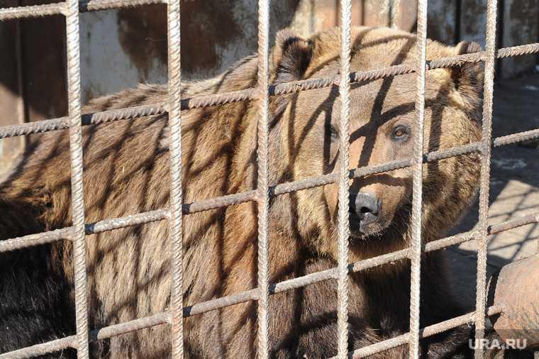 Контактный зоопарк. Челябинск.