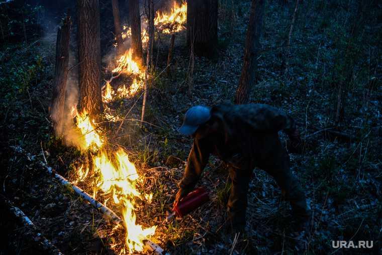 лесные пожары штрафы за поход в лес Свердловская область