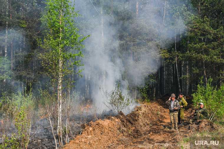 запрещено посещать лес лесные пожары Свердловская область указ губернатора