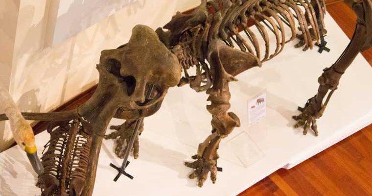 останки доисторической фауны ЯНАО нахождение