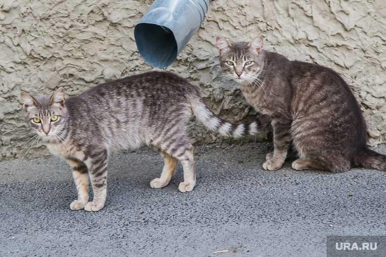 Москва кошки суицид